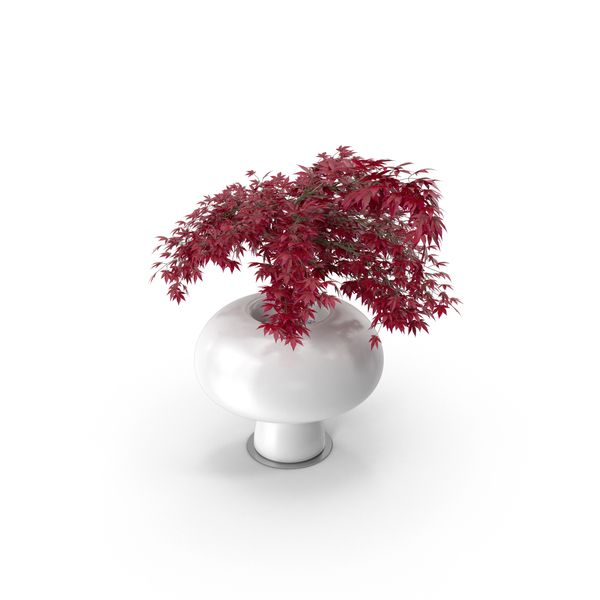 Boyo Vase with Plant PNG & PSD Images