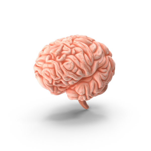 Brain PNG & PSD Images