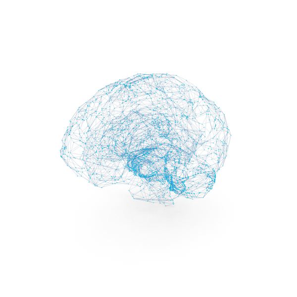 Brain Wire-frame PNG & PSD Images