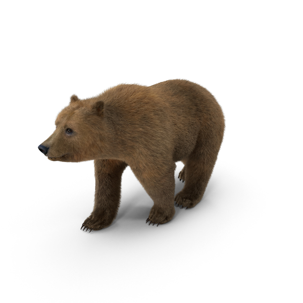 Brown Bear Object