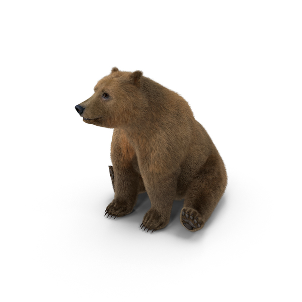Brown Bear with Fur Rigged Object