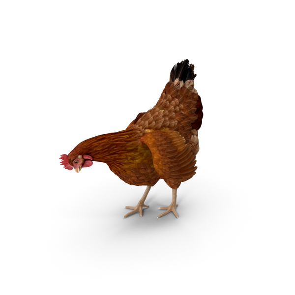 Brown Chicken PNG & PSD Images