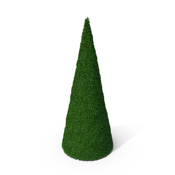Bushes Cone PNG & PSD Images