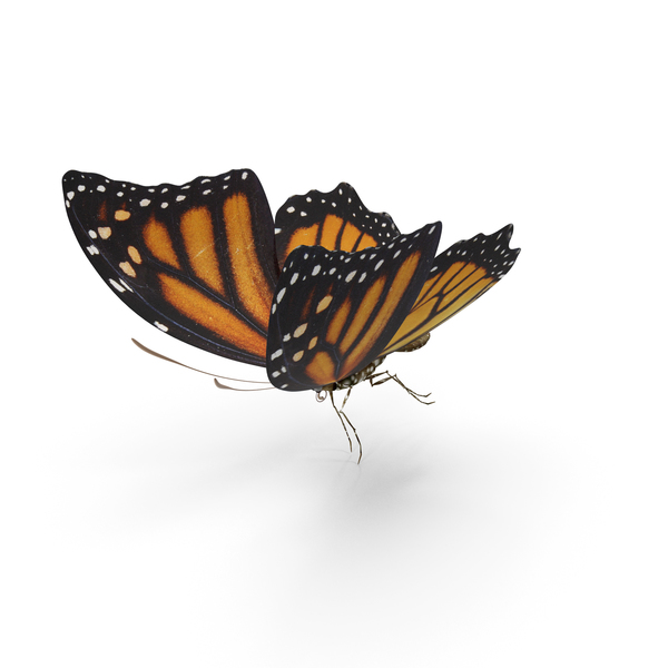 Butterfly Tiger Monarch PNG & PSD Images