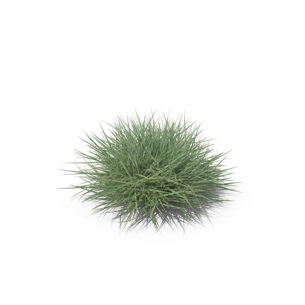 Button Grass PNG & PSD Images