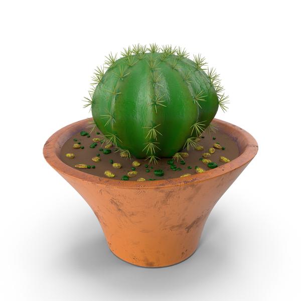 Cactus Barrel Pot PNG & PSD Images