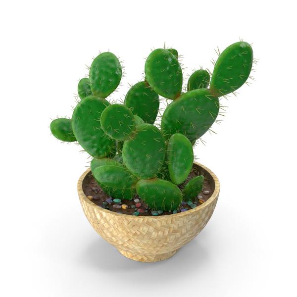 Cactus Multi Pot PNG & PSD Images