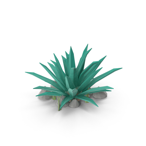 Desert: Cactus with Rocks PNG & PSD Images