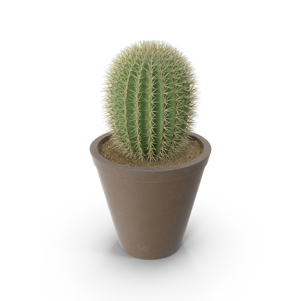 Cactus PNG & PSD Images