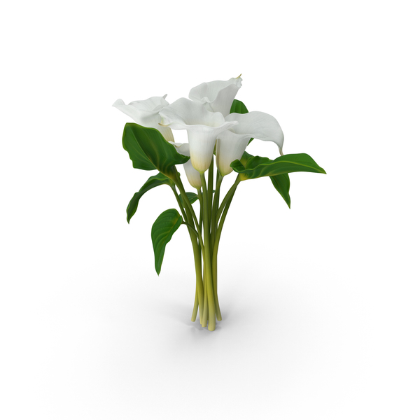 Calla Lilies PNG & PSD Images