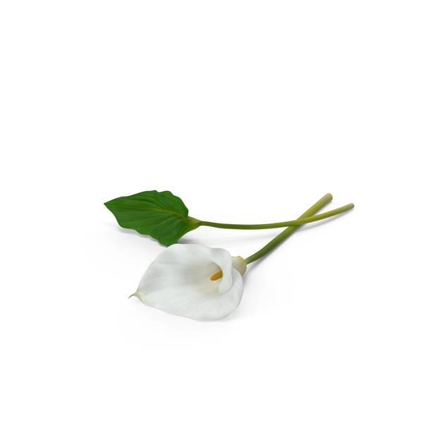 Calla Lily with Leaf PNG & PSD Images