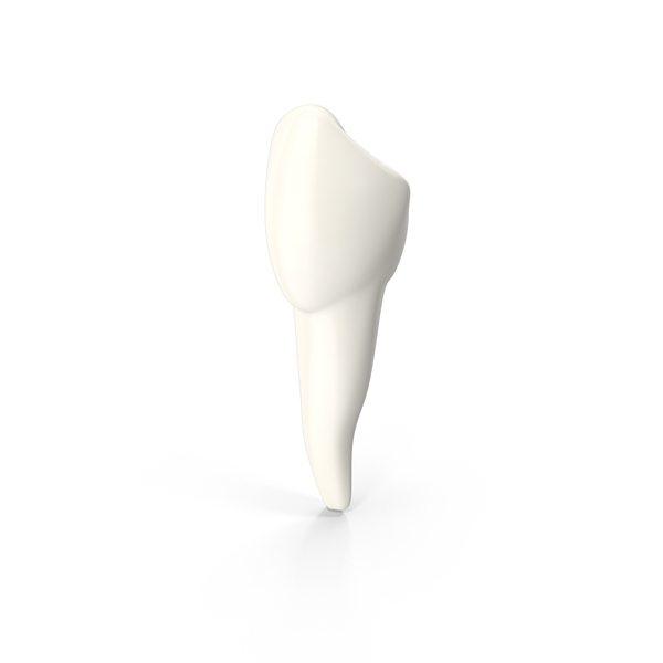 Canine Tooth PNG & PSD Images