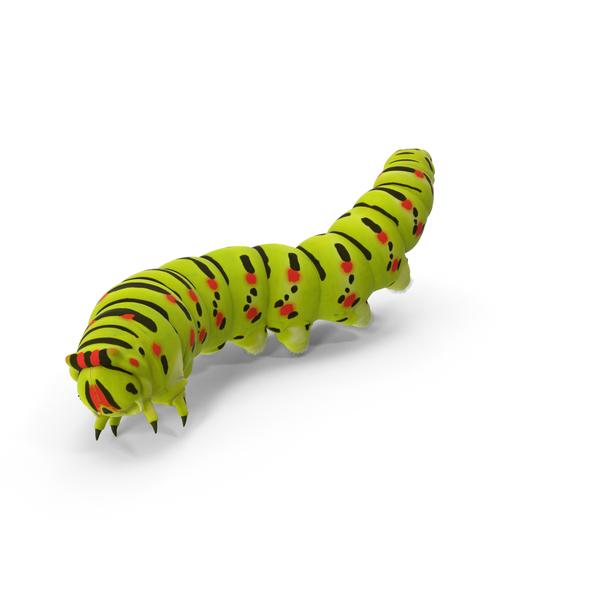 Caterpillar Object