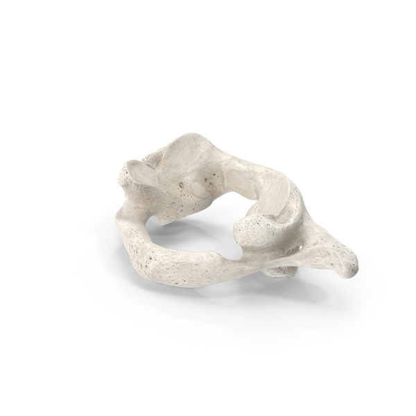 Cervical Vertebrae C1 Atlas White PNG & PSD Images