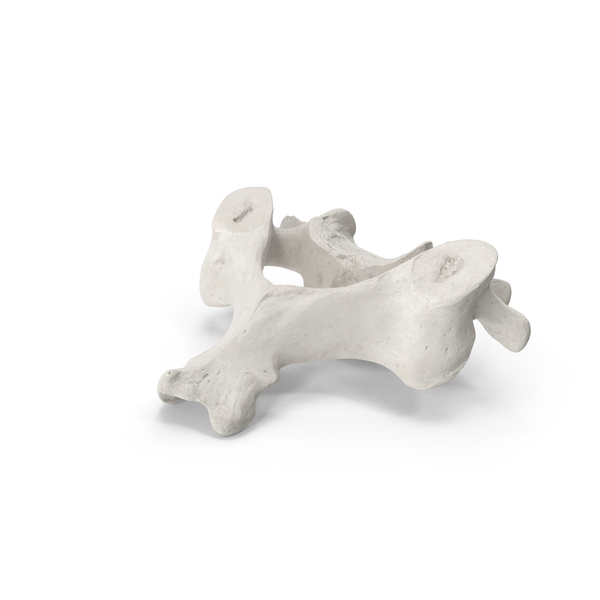 Spine: Cervical Vertebrae C3 to C6 White PNG & PSD Images