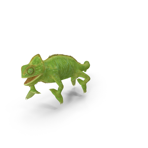 Chameleon Walking on Branch Pose PNG & PSD Images