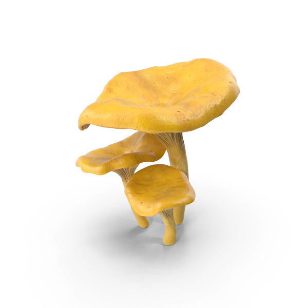 Chanterelle Mushrooms PNG & PSD Images