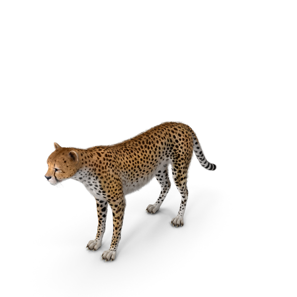 Cheetah with Fur PNG & PSD Images