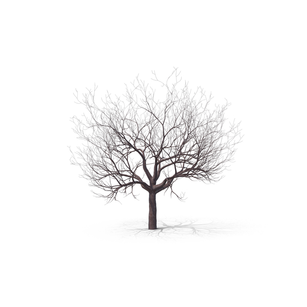Tree: Cherry PNG & PSD Images