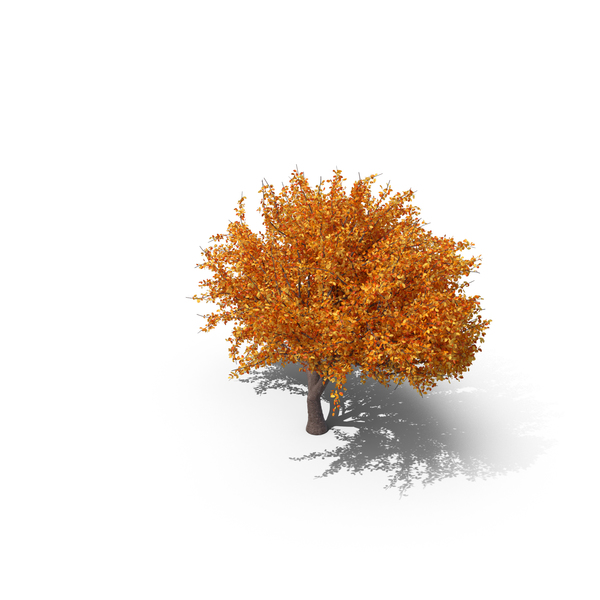 Cherry Tree Autumn PNG & PSD Images