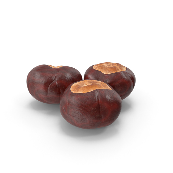 Chestnut Seed PNG & PSD Images