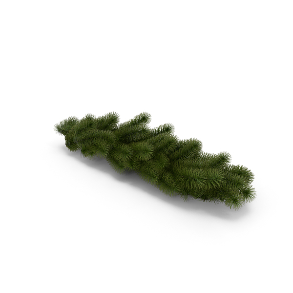 Christmas Tree Branch PNG & PSD Images