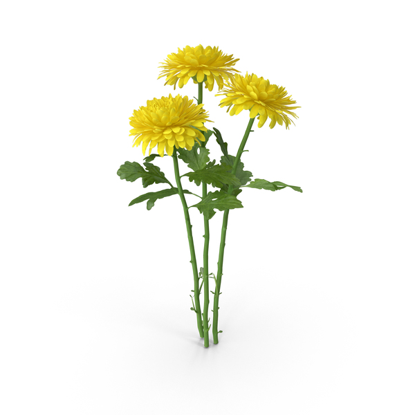 Chrysanthemum Bouquet PNG & PSD Images