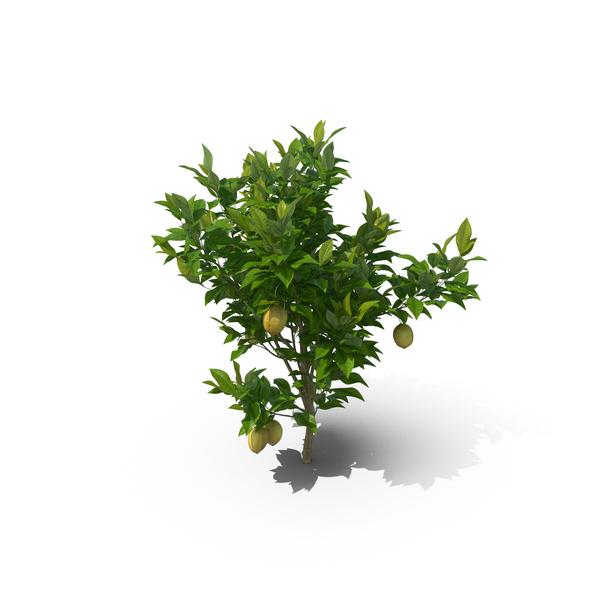 Tree: Citrus Lemon PNG & PSD Images
