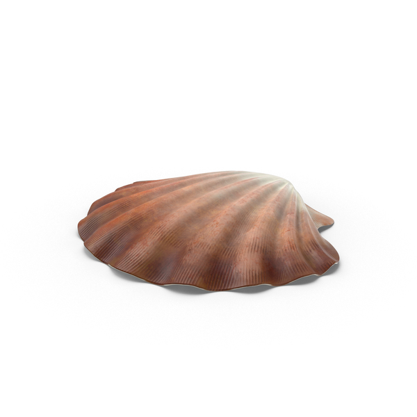 Clamshell: Clam Shell PNG & PSD Images