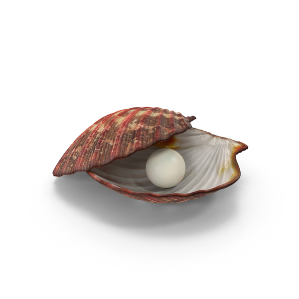 Clamshell: Clam Shell With Pearl PNG & PSD Images