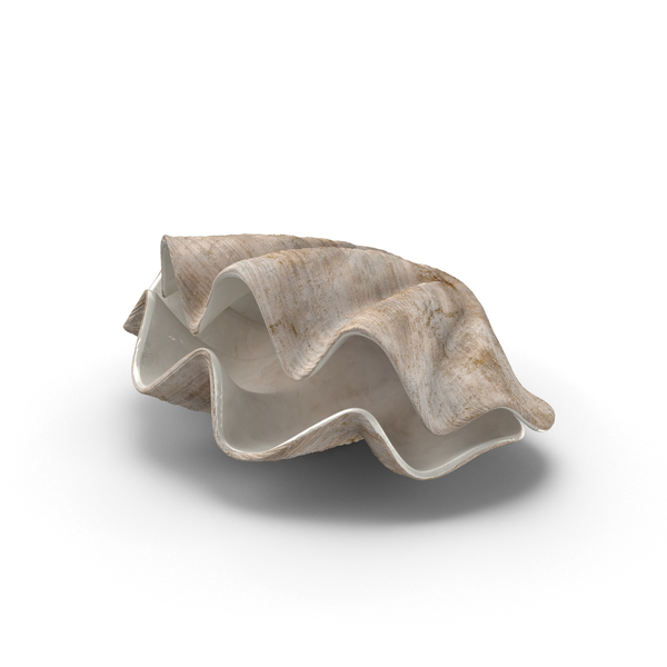 Clam Shells Object