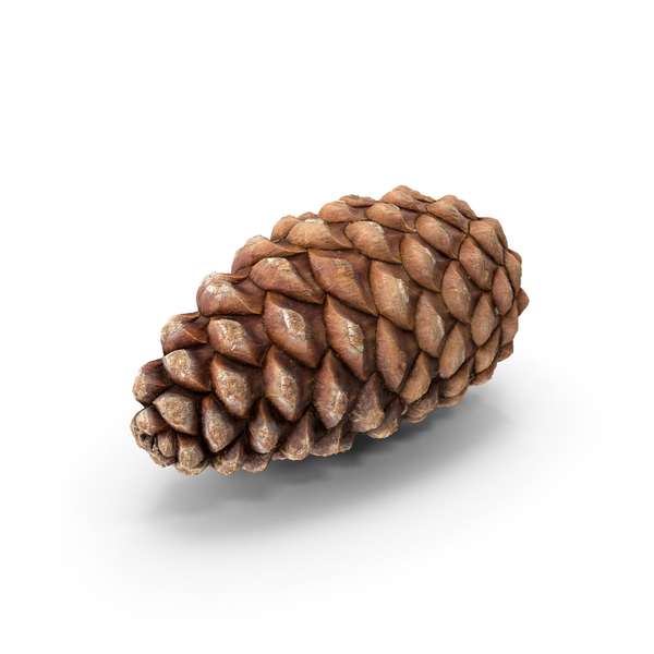 Conifer: Closed Pine Cone Flat PNG & PSD Images