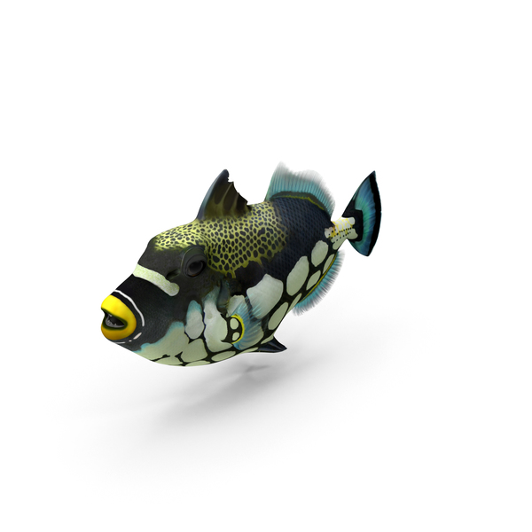 Clown Trigger Fish PNG & PSD Images