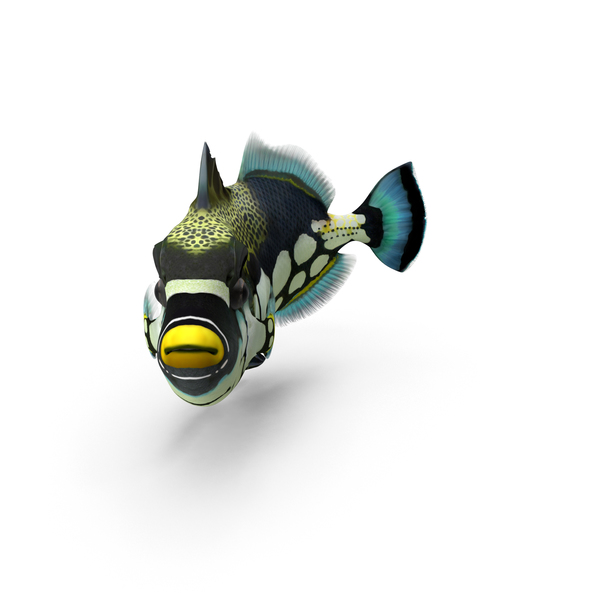 Clownfish: Clown Trigger Fish PNG & PSD Images