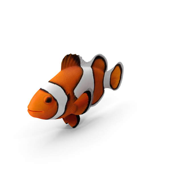 Clownfish PNG & PSD Images