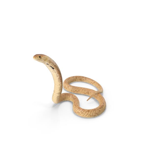Cobra Light Skin Alert Pose PNG & PSD Images