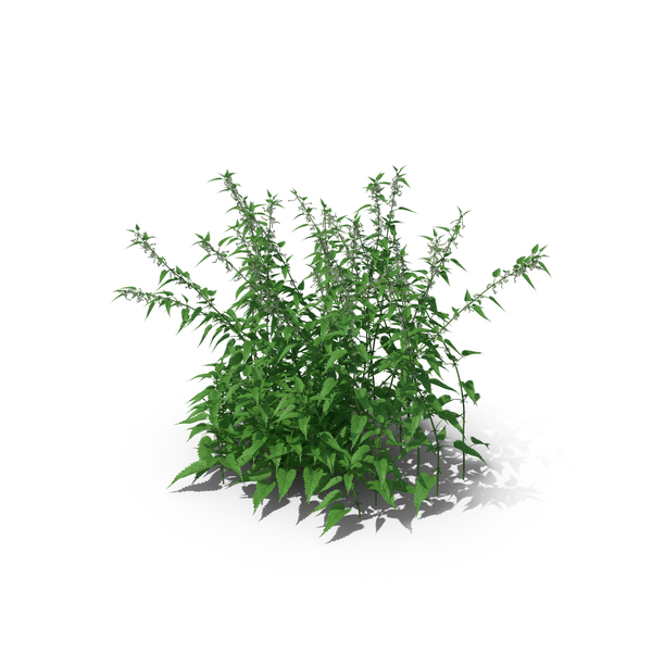 Common Nettle Grass PNG & PSD Images