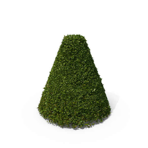 Topiary: Cone Hedge Shrub PNG & PSD Images