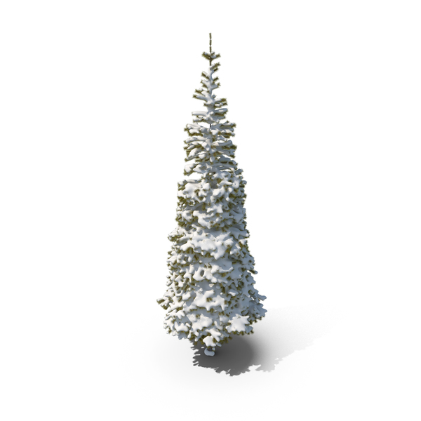 Conifer Snow Covered PNG & PSD Images