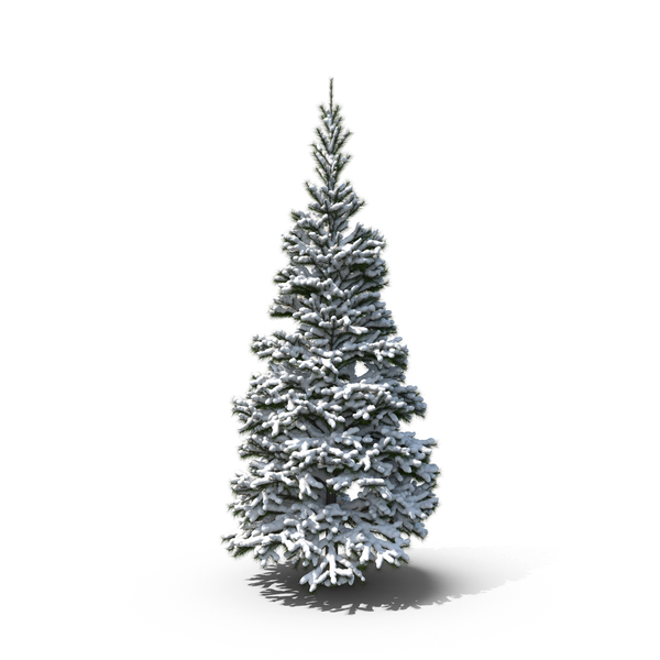 Conifer Snow PNG & PSD Images