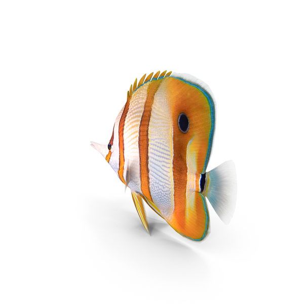 Butterfly Fish: Copperband Butterflyfish PNG & PSD Images
