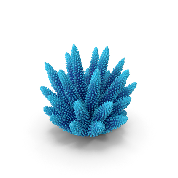 Coral 1 blue PNG & PSD Images