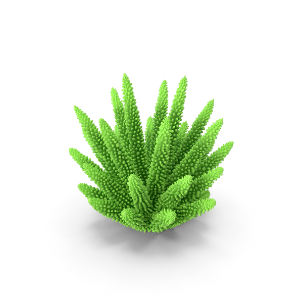 Reef: Coral 1 Green 2 PNG & PSD Images
