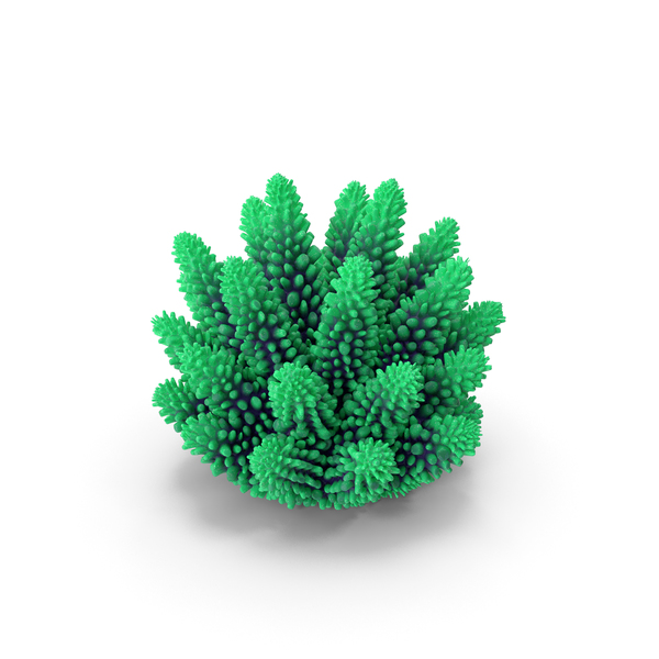 Coral 1 green PNG & PSD Images