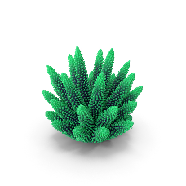 Reef: Coral 1 Green 1 PNG & PSD Images