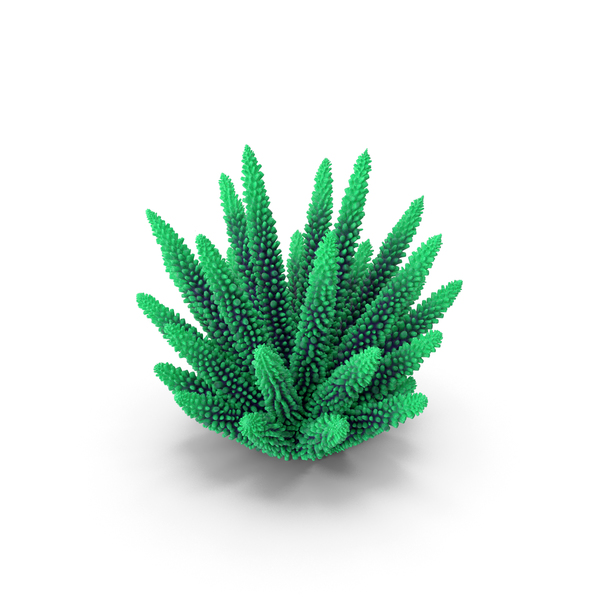 Coral 1 Green 1 PNG & PSD Images