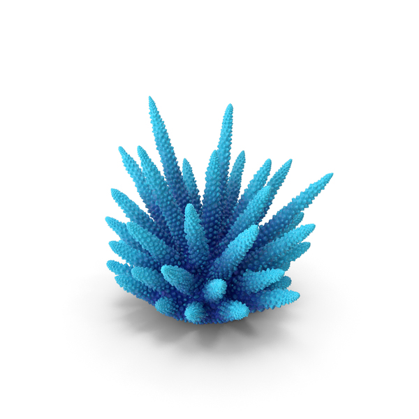 Coral 2 Blue PNG & PSD Images