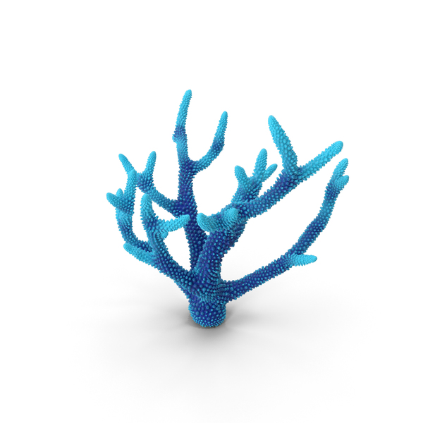 Reef: Coral Blue PNG & PSD Images