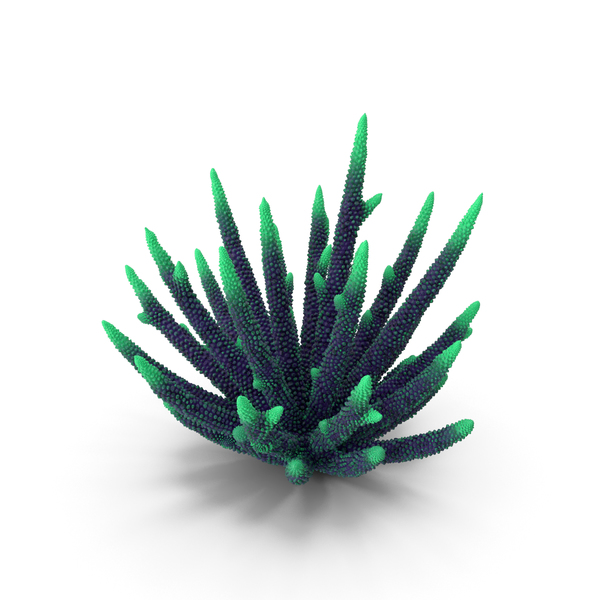 Finger: Coral Green PNG & PSD Images