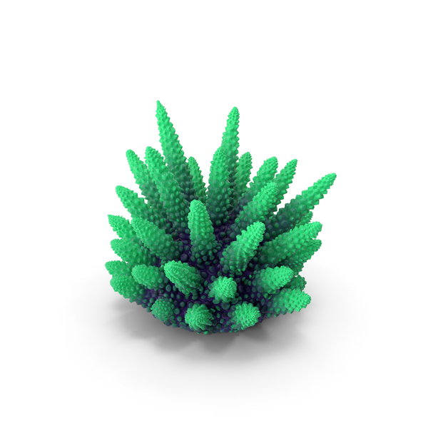 Reef: Coral Green PNG & PSD Images